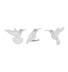 coloring page with hummingbird exotic birds vector image