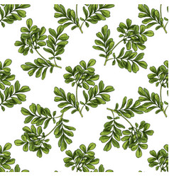 Moringa seamless botanical pattern vector