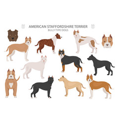 Pit bull type dogs american staffordshire terrier vector