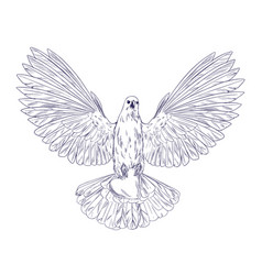 White dove in flight holding heart ink sketch vector
