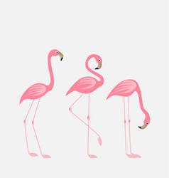 tropical bird flamingos vector image