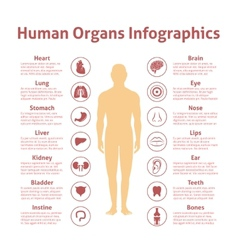 Human infographic set vector image vector image