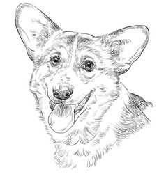 Pembroke welsh corgi hand drawing portrait vector