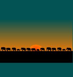 herd of elephants vector image