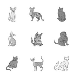 Collection of cats in one picture different cats vector