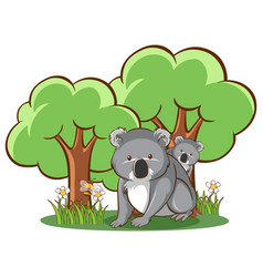 koala in forest on white background vector image
