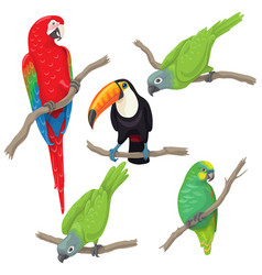 tropical birds set vector image