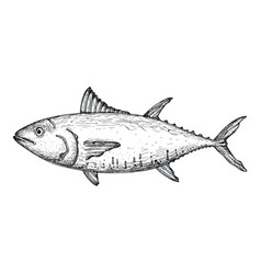 Tuna fish hand drawn isolated icon vector