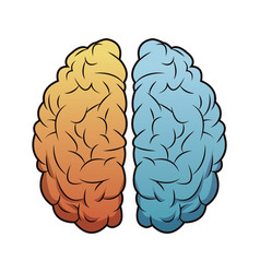 brain mind idea creativity memory image vector image
