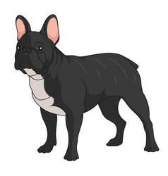 Color a french bulldog vector