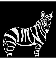 Hand-drawn pencil graphics zebra Engraving stencil vector