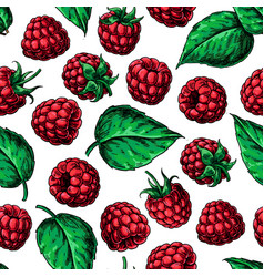 raspberry seamless pattern drawing vector image