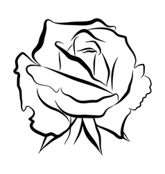 Sketch line drawing of rose vector image