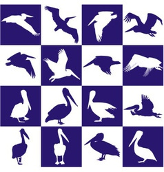 Blue and white background with pelican vector image