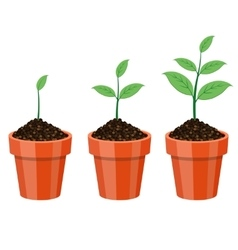 Plant Growing in the pot vector image vector image