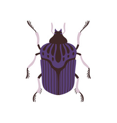 Beetle insect blue and black bug top view flat vector