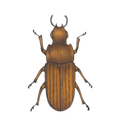 bug brown hand drawn insect vector image