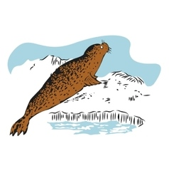 Color sketch of fur seal resting on ice vector