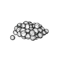 fish caviar hand drawn isolated icon vector image