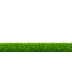 green grass and white background vector image