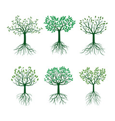 Set green trees with leafs and roots vector