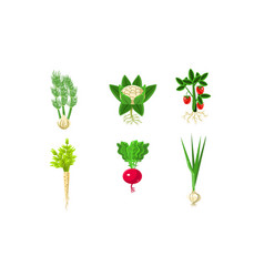 vegetables with leaves and roots set strawberry vector image