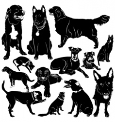 dog with details vector image
