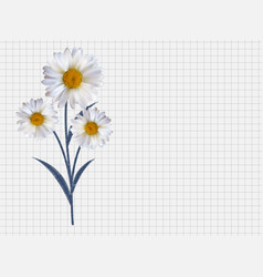 Colorful naturalistic beautiful 3d chamomile vector
