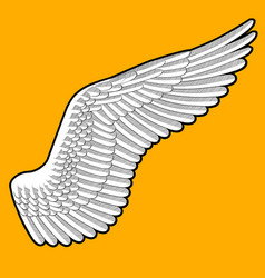 Drawing of birds wing with detailed feathers on vector