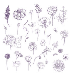 Hand drawn outline floral elements set collection vector