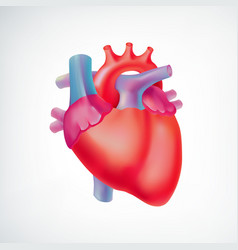 Medical light organ anatomic concept vector