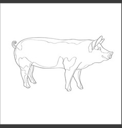 pig side view line vector image