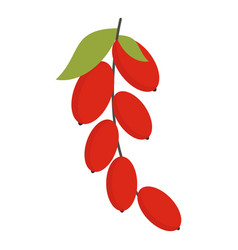 Red berries of cornel or dogwood icon isolated vector