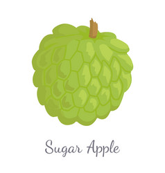 sugar-apple sweetsop custard apple isolated icon vector image