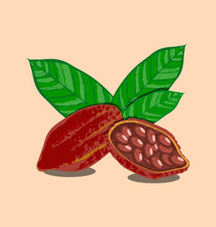 cocoa fruits and leaves whole fruit cocoa beans vector image