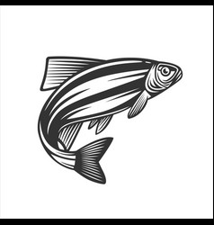 fish fresh seafood template design vector image