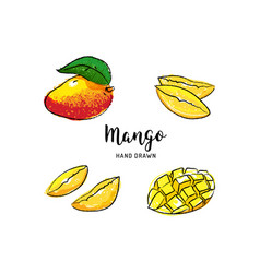mango fruit drawing hand drawn vector image