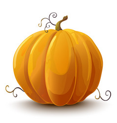 Pumpkin vegetable vector