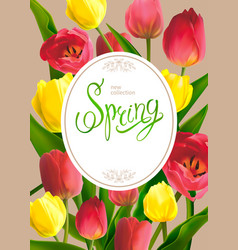 spring bouguet of tulips vector image