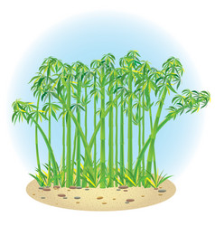 bamboo 1 vector image
