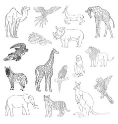 set of animals parrot vector image