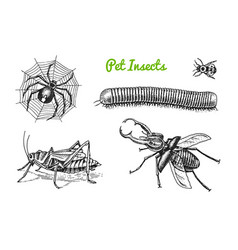 big set insects bugs beetles tattoo spider vector image