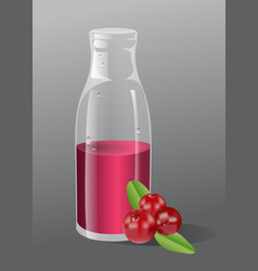 cranberry juice vector image