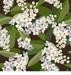Seamless background from cherries flower vector image