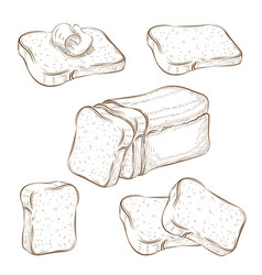 Set drawn sliced bread and toasts vector