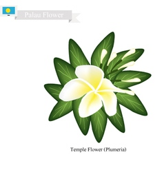 Temple flower a popular flower in palau vector