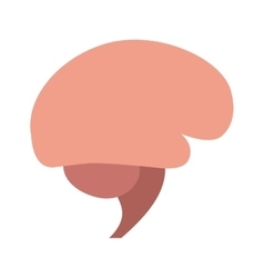Human brain organ isolated icon vector
