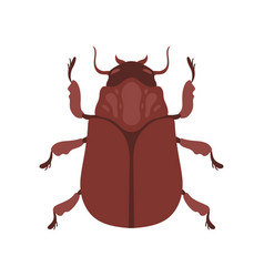 Beetle insect brown bug top view vector