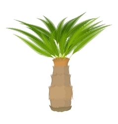 Cycas palm icon cartoon style vector
