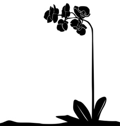 for designers plant - orchid vector image